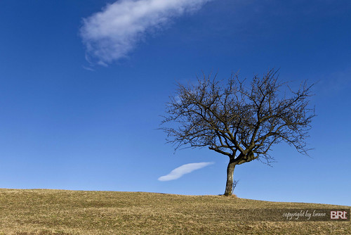 lonely_tree_001