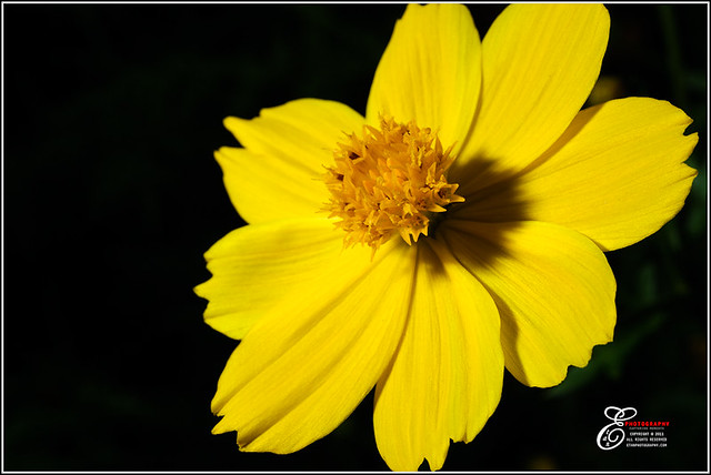 Flower - 001