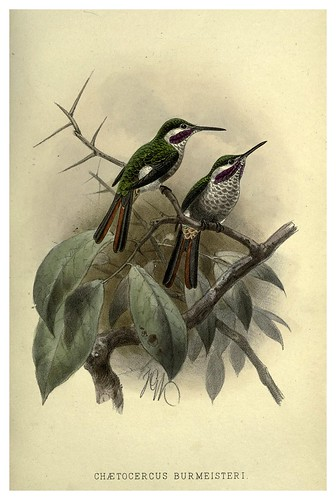 025-Colibri Burmeisteri-Argentine ornithology…1888- William Henry Hudson y Philip Lutley Sclater