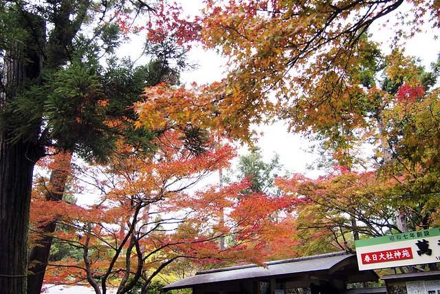 101113_150651_奈良公園_春日荷茶屋