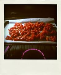tomatoes roasting-pola