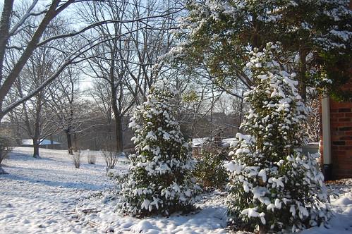 Winter 2011 - plants