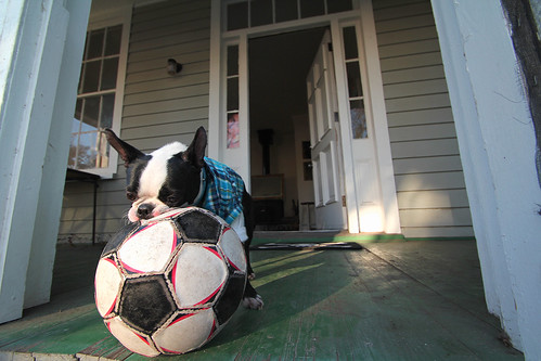 Frito eating a soccer ball