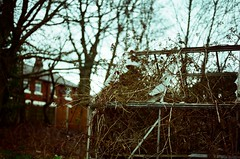 Greenhouse. (thebastardchild) Tags: art film nature 35mm vintage fun cool lomo lomography arty lofi olympus hobby oldschool retro greenhouse 35mmfilm selftaught passion analogue smashed amateur patience rundown olympusom10 deralict amateurphotographer amateurphoto amateurphotography 35mmfilmphotography amateurfilmphotography amateur35mmfilmphotography amateurfilmphoto amateurfilmphotograph amateurfilmphotographer