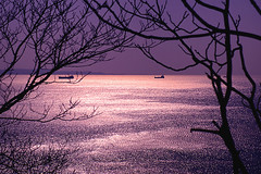 TRAMONTO sul mare di TRIESTE (marvin 345) Tags: old sea italy sun classic nature vintage italia mare voiture trieste vecchio friuliveneziagiulia vecchie tramontp