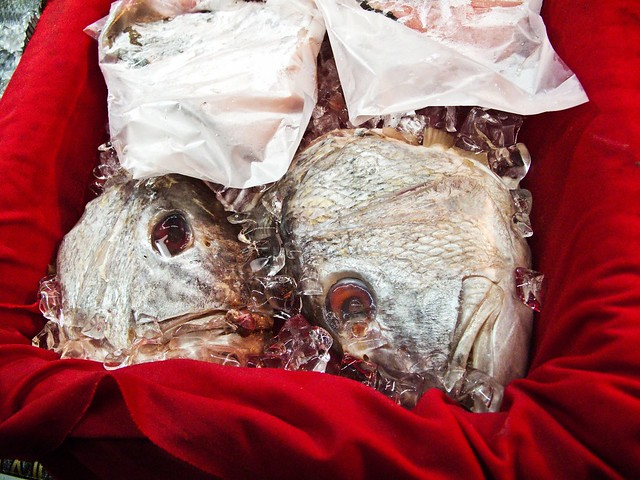 IMG_0586 Fish Head