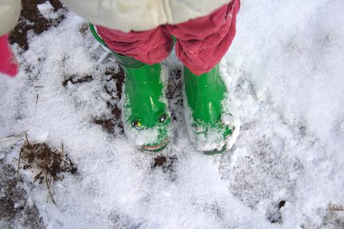 271: Snowy frogs