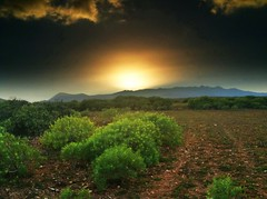 An the day is over (Carmen Cabrera (tSfruit)) Tags: sunset naturaleza verde green nature grancanaria atardecer canarias canaryislands hdr app 3gs apps iphone mobileshot mobileart iphonephoto iphonography iphoneart iphoneshot iphoneography iphoneographer iphoneartwork iphonographer editedoniphone iphone3gs carmencabrera carmencabreraiphoneography carmencabreraphotography