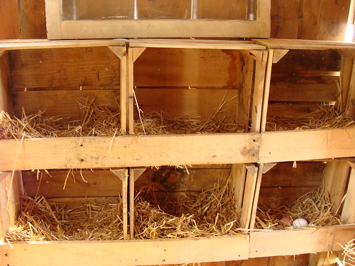 Chicken Nests