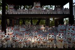 Welcome Cat (mrhayata) Tags: japan cat geotagged temple tokyo blog contax setagaya welcomecat gotokuji ndigital mrhayata geo:lon=139647023 geo:lat=35648482