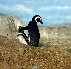 ZOO LIFE.... (bitsorf: Thank you 1,500,000 times) Tags: nature animals zoo captivity grandrapidsmi johnballparkzoo kentcountymichigan mygearandme mygearandmepremium