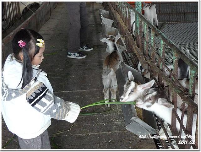 宜農牧羊場 (18)