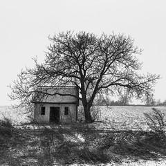 No. 23754 (halfoto.hu) Tags: winter blackandwhite house snow tree monochrome square landscape hungary fa magyarország tájkép ház hó tél feketefehér négyzet monokróm pécsváradkörnyékén