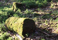 A special kind of bark!;) (:Linda:) Tags: forest germany moss log woods village thuringia trunk rinde moos ve