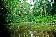 _MG_5780 (m24instudio) Tags: animal amazon rainforest wildlife instudio m24 amazonrainforest m24instudio travelphotographer m24instudiophotography m24instudiophoto m24intudio m24instudiotravelphotography m24instudiotravelphotographer