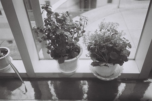 (really tiny) flowers in the window