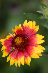 Like Sunshine (bigbrowneyez) Tags: pink flowers brown detail macro green beautiful sunshine yellow colorful bright sweet bokeh delicious stunning glowing cheerful joyful inspiring inticing prettypetals likesunshine