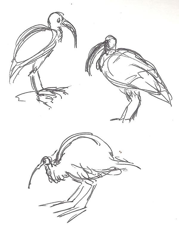 Bird scribbles