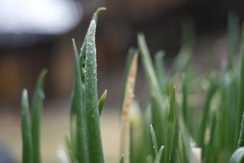 74:365, rainy greens