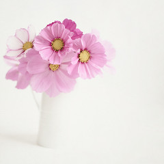 Jug of pinkness (borealnz) Tags: pink flowers autumn summer white square soft pretty jug romantic highkey delicate arrangement cosmos bsquare