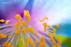 IMG_1725_edited (JCNixonPhoto) Tags: flowers flower canon longwoodgardens 5dmkii