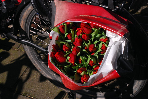 Tulips in a pannier