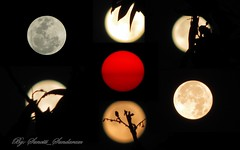 A Sun and Six Moons,  All Sooooooper.......... (Sunciti _ Sundaram's Images + Messages) Tags: sky sun moon flower nature flora luna 1001nights bestshot march19 blueribbonwinner 10faves 5photosaday abigfave enstantane anawesomeshot colorphotoaward impressedbeauty aplusphoto agradephoto eperke concordians brilliantphotography abovealltherest elitephotgraphy supermoon winklerians