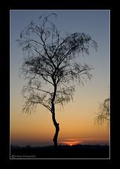 (Marjo1963) Tags: sunset tree zonsondergang boom 032011
