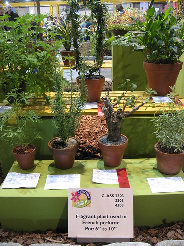 scented plant competition