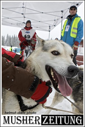 IFSS WC 2011, Hamar, Norway: Angelika Dietrich, Husky-Musher, Germany