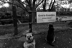For all creatures great and small - except dogs (Dafydd Penguin) Tags: city uk england urban white black dogs monochrome garden bristol nikon all harbour britain cut no centre small 14 great floating gods 20mm nikkor creatures f28 d600