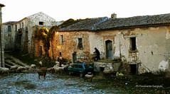 Gregge (fioravantegargiulo) Tags: gregge pascolo roscigno paesaggi rurali pastore snepherd flock