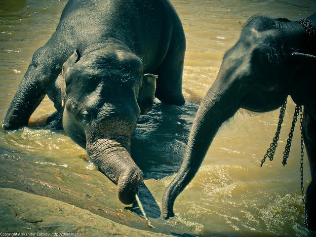 Слоновья дружба
