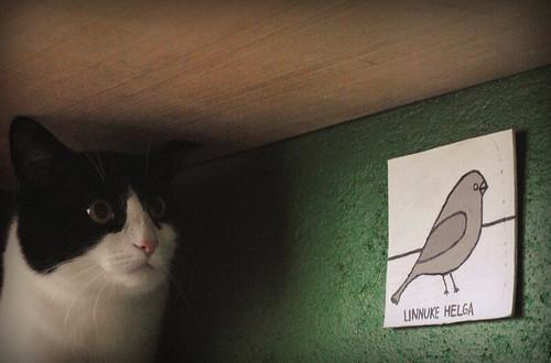linnuke