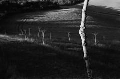 Tramonto (Blackeyedog) Tags: trees light shadow blackandwhite bw white mountain black tree film alberi analog 35mm landscape tramonto takumar ombra nowhere hc110 super 55mm m42 spotmatic 100 135 inverno legacy montagna bianco luce paesaggio umbria biancoenero analogica 163 bosco pellicola umbra kodakhc110 blackwhitephotos autaut fiuminata hardwaresp salmaregia legacypro freestylearistalegacypro