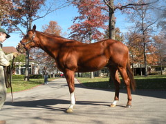 CZ5 (Gordon Calhoun) Tags: horseracing lanesend cityzip