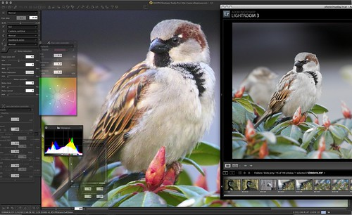 Lr3 vs Silkypix 4. Foveon file. Look at those colors that Silkypix found!