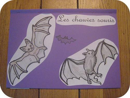 photos site lapbook Chauve souris3