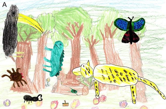 rainforestdrawing1
