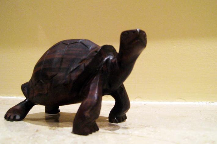 013011_tortoise