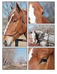 Horses (webber0075) Tags: trees portrait usa brown collage landscape co harne