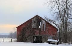 (rickhanger) Tags: winter snow barn wagon redbarn vinecovered rickhanger rickhangerphotography