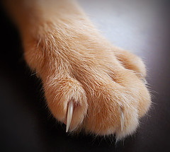 Paws on my desk 1 (*Gitpix*) Tags: pet macro cute animal cat tiere paw furry nikon kitten feline gatos claw lucky coolpix gata felines animales katze paws makro gatto haustier kater claws tier pfoten krallen tatzen mygearandme mygearandmepremium
