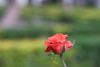 IMG_8858 (Tarun Chopra) Tags: travel india canon photography gurgaon rajasthan udaipur bharat hindustan hindusthan efs55250mmf456is canonefs55250mmf456islens indiatravelphotography rajasthaninwinters gurugram