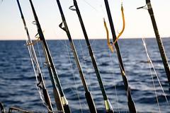 Ready for fish (Svinya Rorbuer) Tags: ski vinter rib lofoten fisk svinya trollfjorden