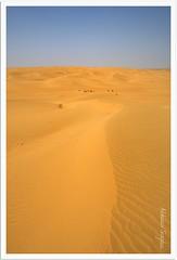 Vast (Abhinav Singhai) Tags: travel india tourism golden sand nikon pattern desert curves tammy tourist traveller tamron sanddunes thar uwa 10mm ultrawideangle d90 incredibleindia greatthar nikond90 1024mm tamron1024mm indiatourist