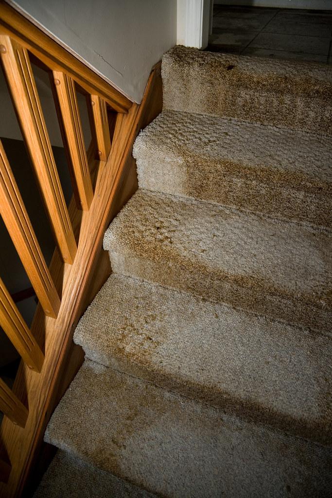 Water Damaged Carpet