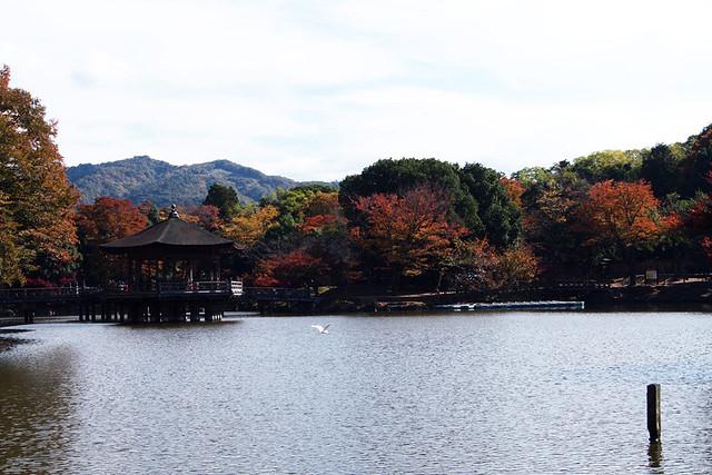 20101116_113925_奈良公園_浮見堂