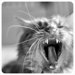 Am I Boring You? (JoGo...) Tags: bw cat mono yawn bored boring whiskers blah freddie yawning