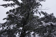 Hello Snow (JordynsAzombie) Tags: winter white snow tree branches snowybranches